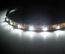 Standard 50cm flexible strip of (30 leds SMD) white